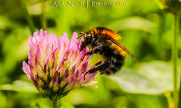 Bee - Free image #293213