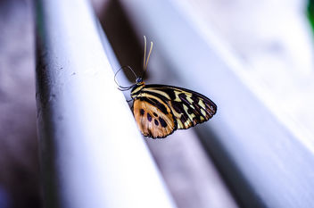 lone butterfly - Kostenloses image #293393