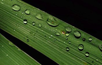 Green and wet - Free image #293493