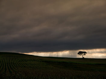 Tree and corn and rays of light - Kostenloses image #293733