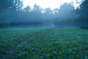 in to the fog - image #293803 gratis