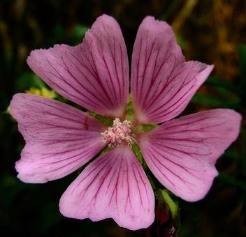 Wild Flowers - image gratuit(e) #293873