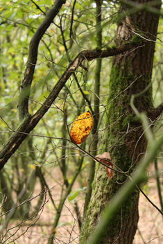 Lonely leaf - image gratuit #294163