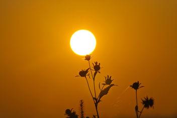 Sunrise - Free image #294253