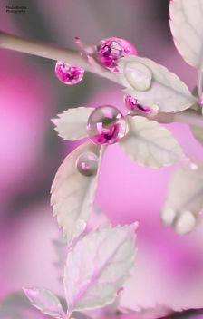 Drops of Life - image gratuit #294293