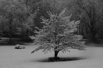 First Snow - image gratuit #294603
