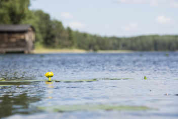 Yellow - image #294633 gratis