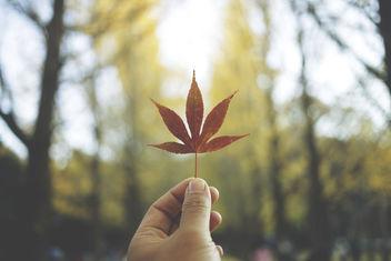 Autumn - image #294673 gratis
