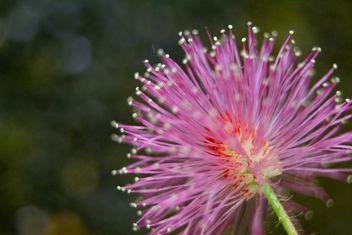 Flower head - Free image #294783