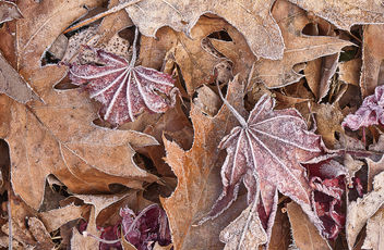 leaves - Free image #294803