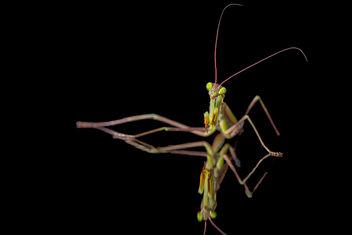 Mantis Mirror - Free image #294933