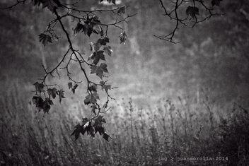 Autumn - Free image #295103