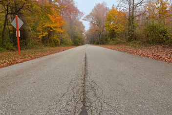 Misty Fall Road - HDR - Free image #295213