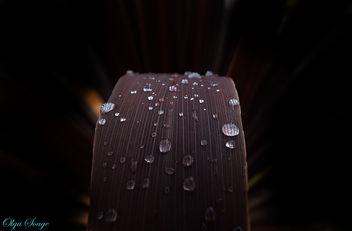 Gotas de lluvia - Free image #295243
