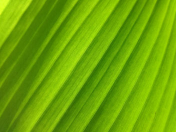 green flags - Free image #295673