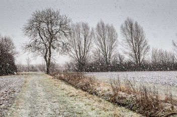 20150131__5D_2384 - RSPB Ouse Fen Snowy Day.jpg - Free image #296023