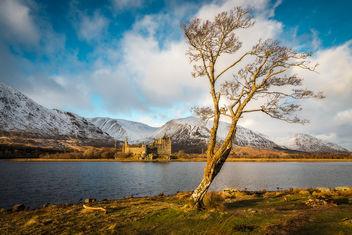 Castle...tree....tree...castle. - Free image #296033