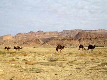 Route entre Hammat-al-jarid et As-Sabikah - Free image #296173