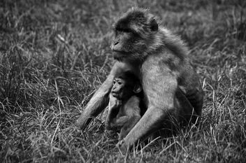 Mother and Baby - image #296453 gratis
