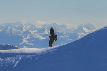 Eagle - image gratuit(e) #296483