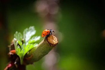 ladybug - image gratuit #296663