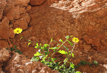 Morocco-Spring is coming at desert - image gratuit #296723