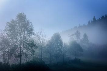 Misty trees - image #297043 gratis