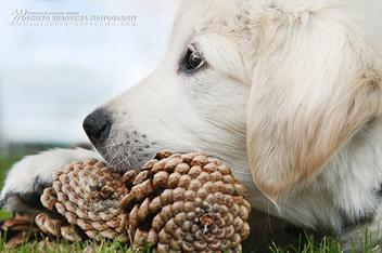 Puppy, 2012 - Kostenloses image #297083