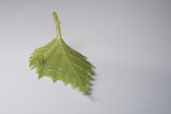 Leaf - Free image #297203
