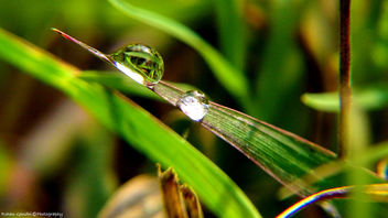 Dew Drops - The Gems of Morning - image gratuit #297323