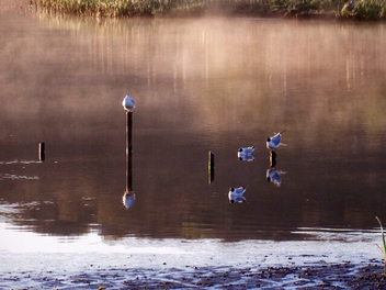 Mist at sunrise Leighton Moss RSPB, Silverdale, Lancashire - Free image #297333