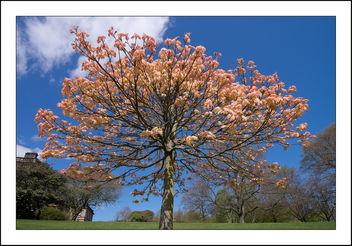 Spring Vibrancy - бесплатный image #297373
