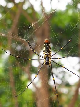 Spider on a net - Free image #297593