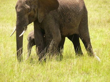 Elephant & her Baby - image gratuit #298253