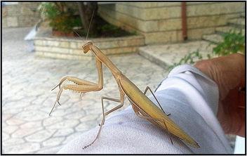 Giant Mantis - image #298333 gratis