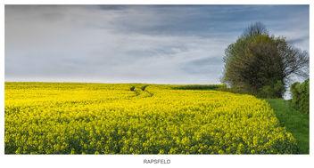 rape field - Kostenloses image #298563