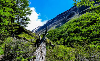 Dead Tree - Free image #298663