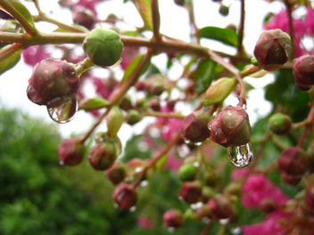 Water drops - Free image #299013