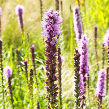 Spring - image #299173 gratis