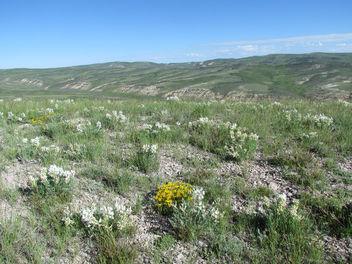 Southwest Wyoming sage-steppe habitat. - Free image #299183