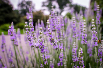 Flowers at Botanic Garden - Free image #299763