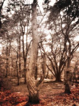 Bronzed Woods - image gratuit #300203