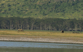 Kenya (Nakuru National Park) Rhino and gnus - image gratuit(e) #300443