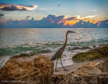 My Florida - Free image #300633