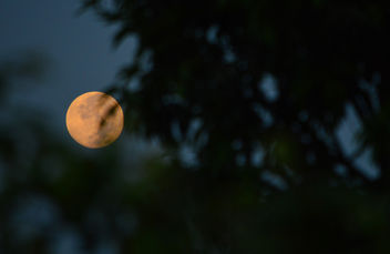 First Impression of the full moon - Free image #300673