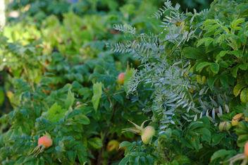 Foliage - image gratuit(e) #300693