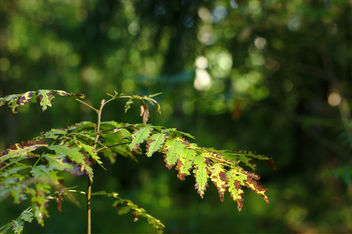 Foliage - Free image #300703