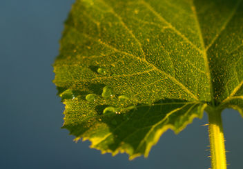 Bright leaf - Free image #300813