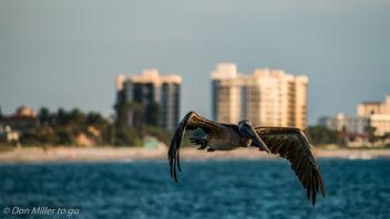 My Florida - Free image #300943