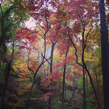 Color canopy - Kostenloses image #301243